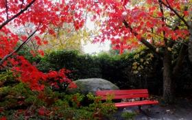 Картинка осень, небо, листья, деревья, природа, лавочка. камень