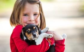 Картинка девочка, puppy, dog, beagle