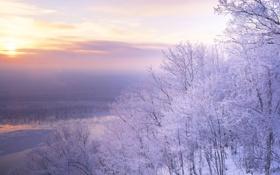 Картинка иней, снег, деревья, пейзаж, закат, природа, сиреновое небо