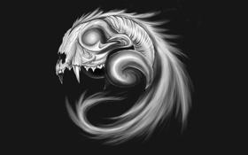 Картинка skull, animal, drawings