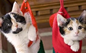 Обои котята, забавные, в носках
