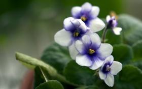 Картинка макро, цветы, природа, весна
