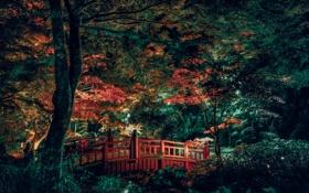 Картинка деревья, мост, ручей, сад