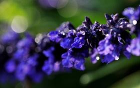 Обои фиолетовый, цветок, фон, ветка, макро