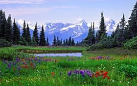 Обои пейзаж, горы, деревья, цветы