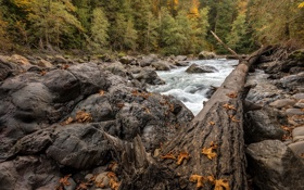 Картинка осень, река, дерево