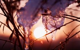 Обои лед, зима, трава, солнце, закат, искры
