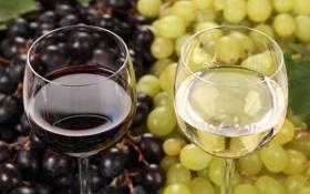 Обои вино, красное, белое, бокалы, виноград