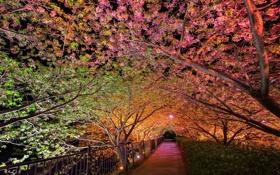 Картинка ночь, парк, весна, подсветка, аллея