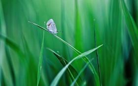 Картинка зелень, трава, листья, бабочка, травинки