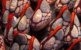 Обои моллюск, раковина, Канада, ракушки, Британская Колумбия