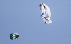 Обои вода, камень, крылья, чайка