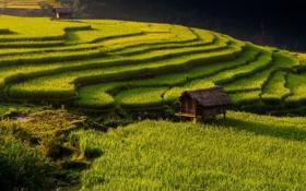 Обои природа, азия, хижина, плантация