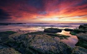 Картинка море, небо, водоросли, закат, камни, океан, скалы