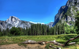 Обои деревья, горы, природа, фото, дерево, обои, пейзажи