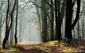 Картинка лес, дорожка, деревья