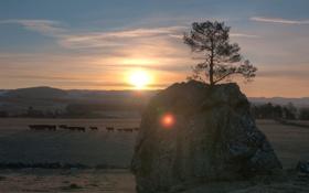 Картинка солнце, скала, дерево, рассвет, утро, коровы, пастбище