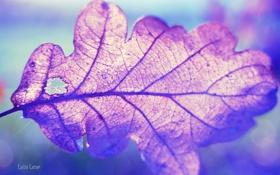 Обои макро, крупный план, природа, лист, macro