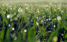Обои трава, макро, роса, блики, утро