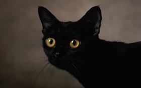 Обои глаза, цвета, фон, чёрного