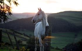 Обои закат, забор, красота, конь
