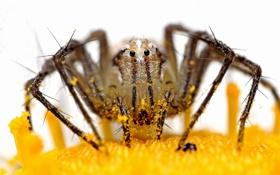 Картинка природа, spider, макро