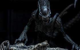 Картинка игрушка, Чужой, статуэтка, Alien, тварь