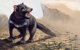 Обои трава, тасманийский дьявол, sarcophilus harrisii, сумчатый черт, зверек, пасть, арт