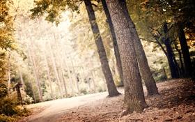 Обои зелень, лес, листья, свет, деревья, пейзаж, природа
