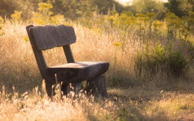 Картинка лето, природа, парк, скамья