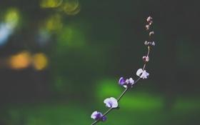 Обои веточка, лепестки, ветка, цветы