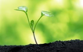 Картинка Паросток, Зелень, Макро, Росток, Грунт, Фото, Земля
