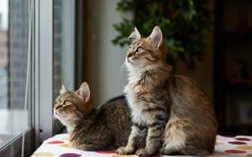 Картинка кошки, комната, коты, растение, окно, внимание