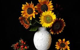 Обои листья, цветы, подсолнух, шиповник, ваза