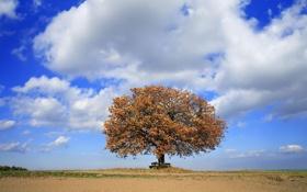 Обои небо, скамейка, дерево