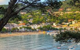 Картинка море, пляж, деревья, пейзаж, ветки, берег, дома