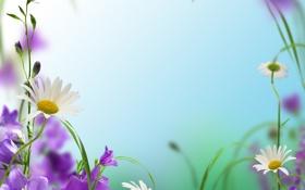 Обои природа, весна, лепестки, цветы