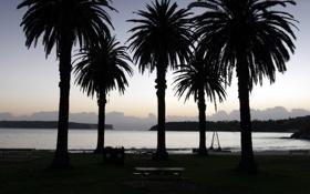 Обои вечерние пейзажи, океан, пальма, сумерки, вода, море, дерево