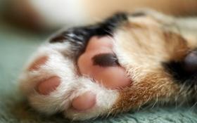 Картинка кошка, макро, лапа, пол, лапка