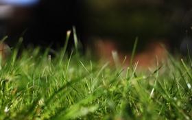 Картинка трава, макро, природа, фокус, grass, nature, macro