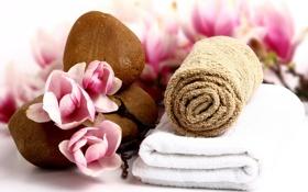 Картинка цветы, камни, полотенце, лепестки, розовые, rose, pink