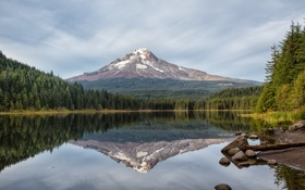 Картинка лес, озеро, отражение, гора, Oregon, Trillium Lake