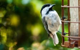 Обои макро, фото, птица, обои, перья, клюв, птичка
