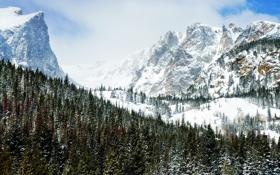 Картинка зима, лес, горы, скалы, peaks of winter