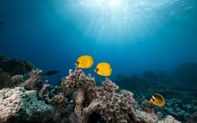 Картинка рыбы, природа, морское дно, солнечные лучи, fish, the nature, the sea bottom
