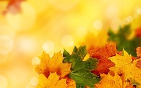 Обои осень, листья, прожилки, яркость