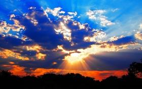 Обои небо, облака, лучи, деревья, закат, тучи, горизонт