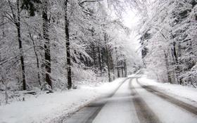Картинка лес, поворот, вдаль, дорога, зима, снег, пасмурно
