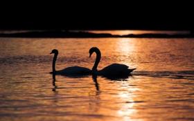 Обои ночь, озеро, лебеди