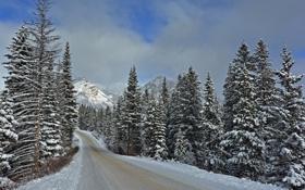 Обои зима, дорога, Banff National Park
